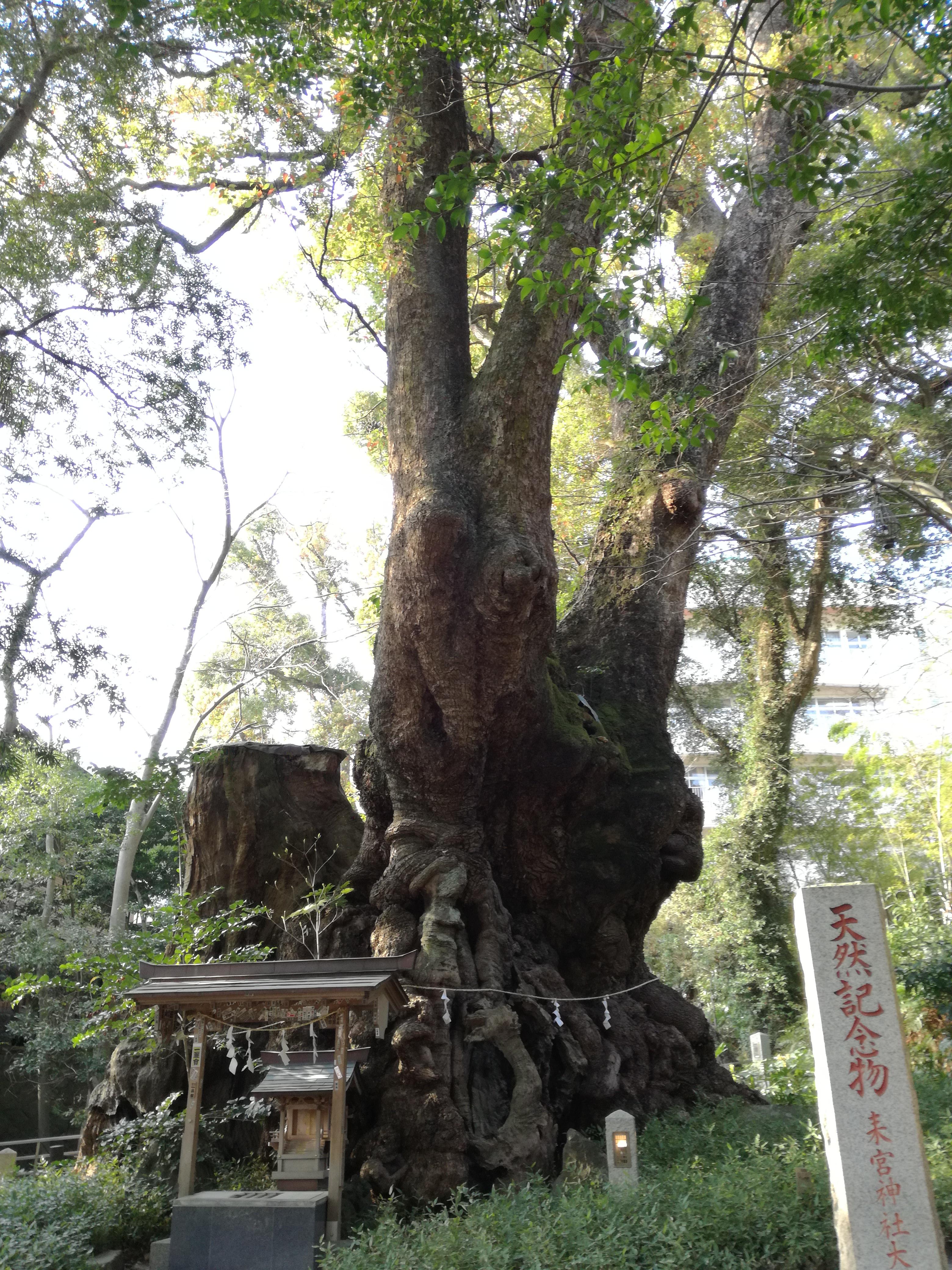樹齢2000年超え!!