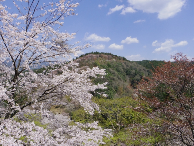 桜から学ぶ。
